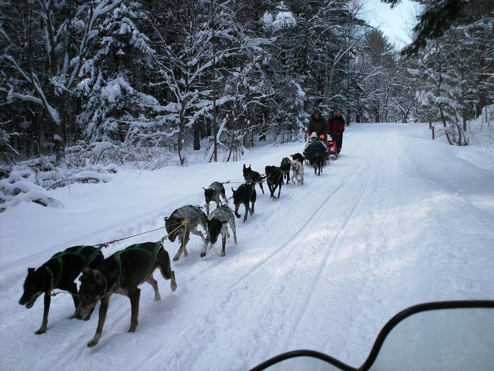 Snocade Dogsled