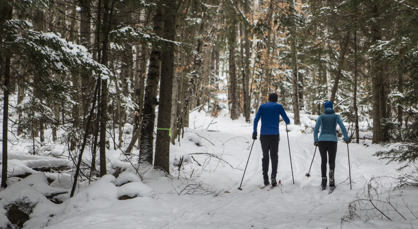 Skiers in the woods