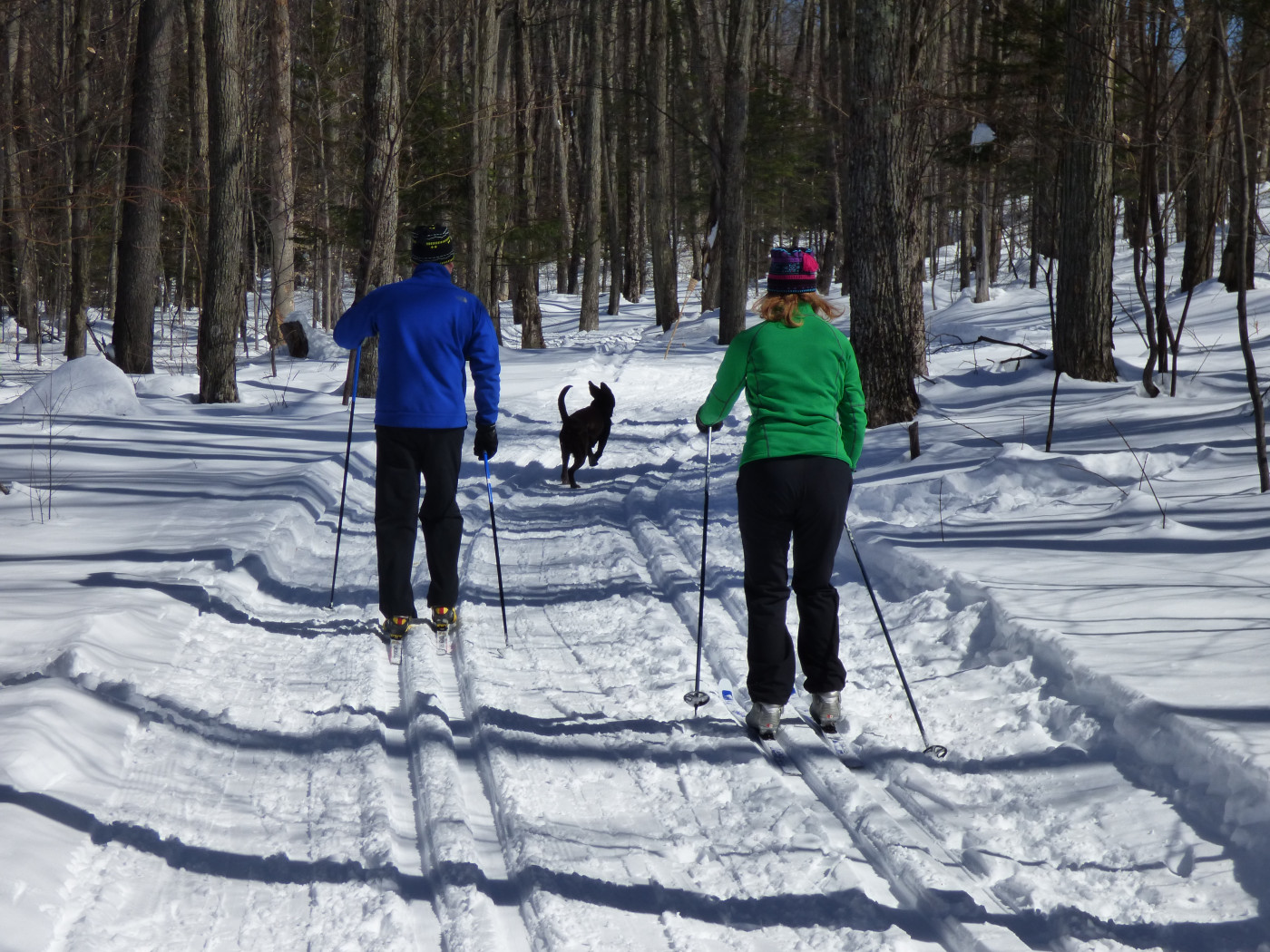 Skiers on groomed, tracked cross-country trails